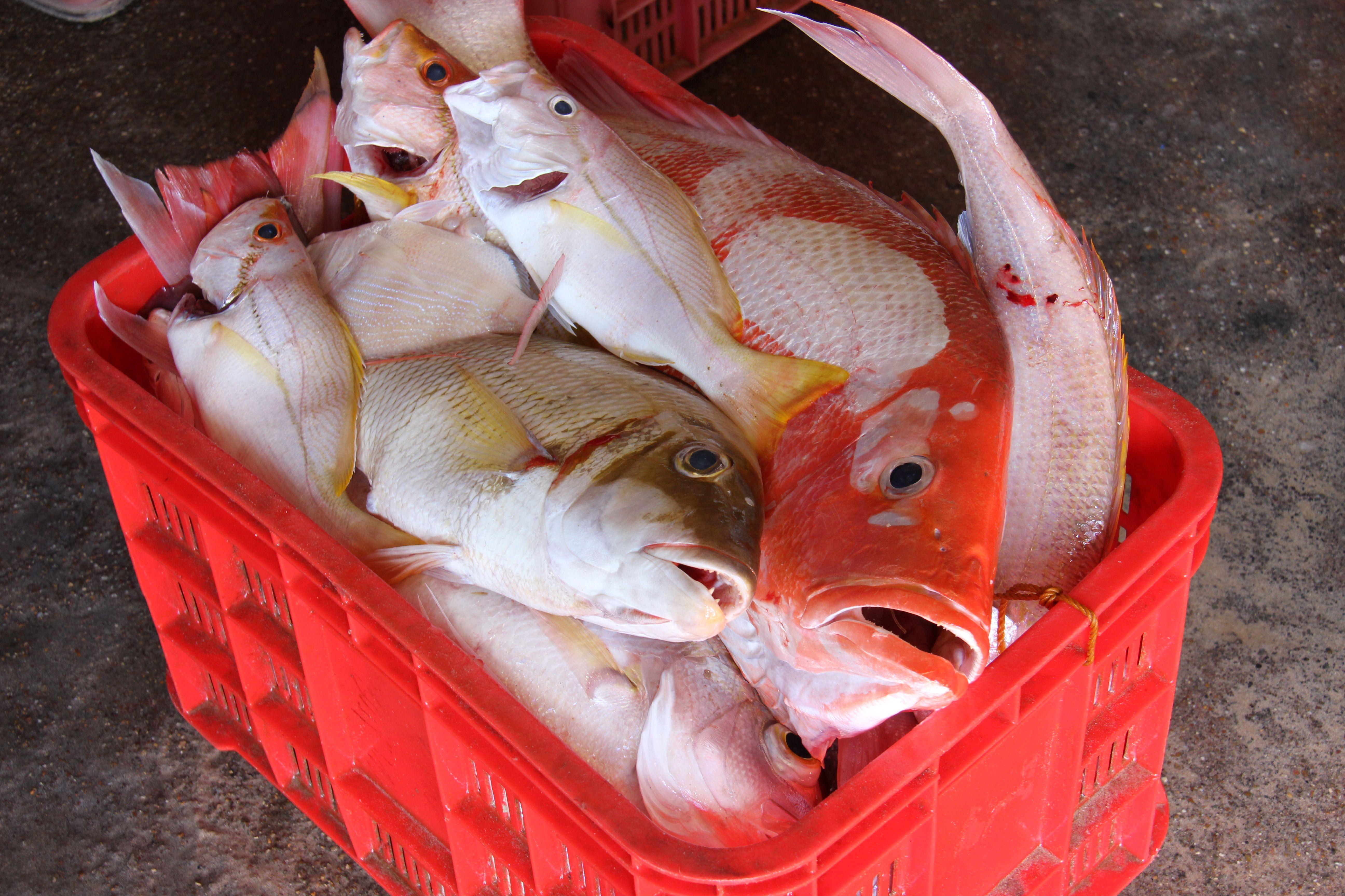 Produits de la pêche à Palawan