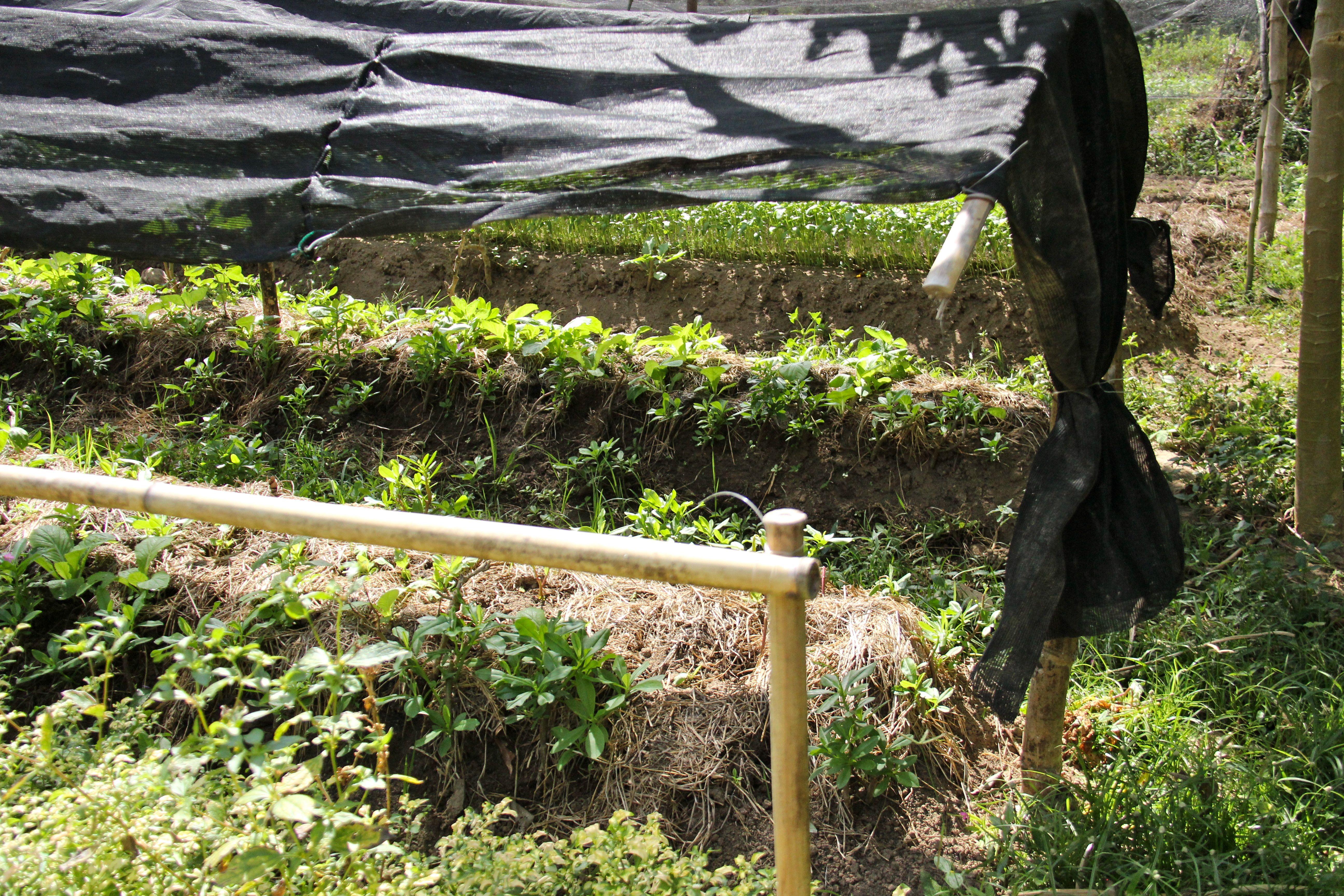 Permaculture Tao farm Palawan