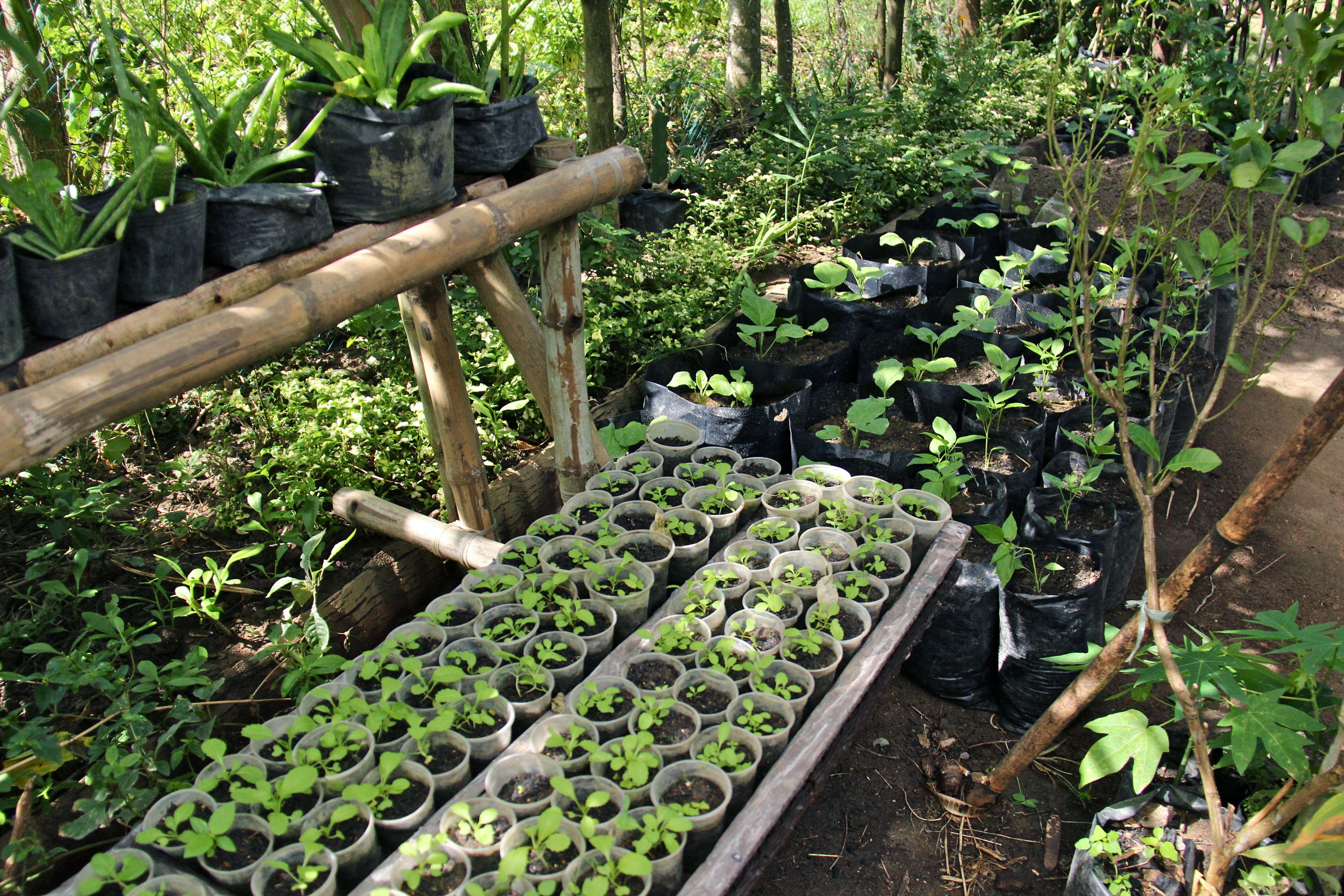 Semis permaculture Tao farm Palawan