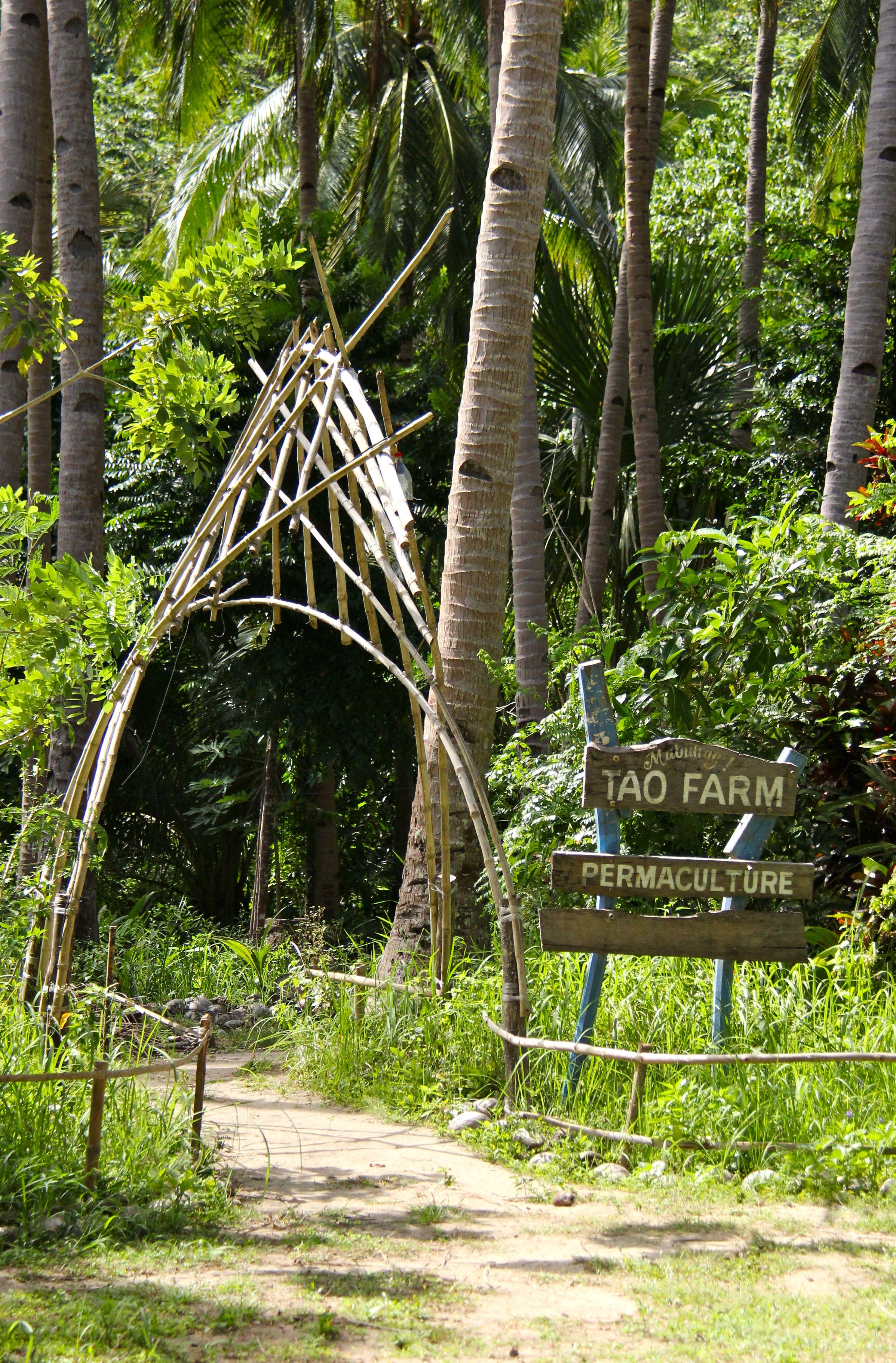 Aubergine Tao farm Palawan - permaculture