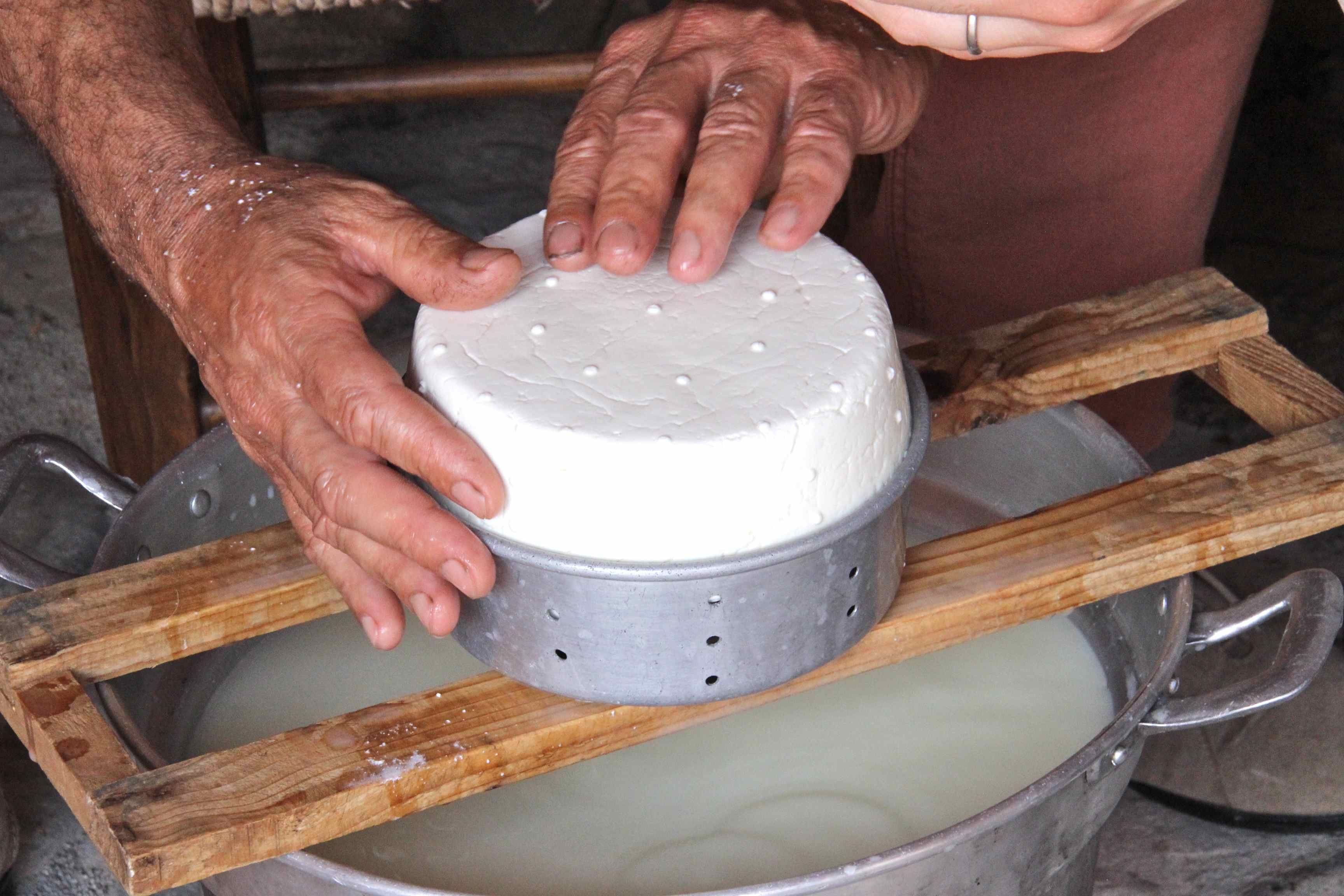 Goat cheese making