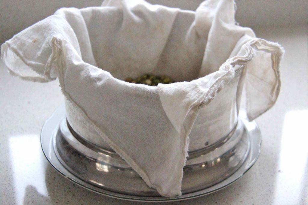Haricots mungo en germination